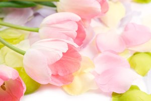 Pink Tulips & Pastel Petals