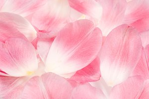 Pink Tulip Petals Background