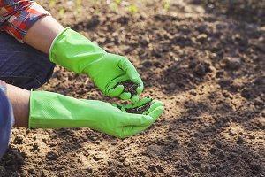 Farmer with soil in hands