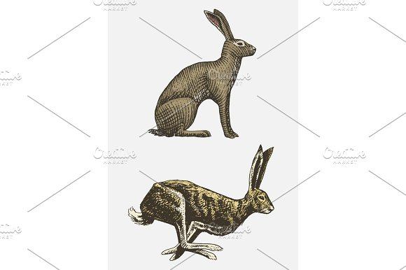Rabbit Or Hare Sitting And Running Hand Drawn Engraved Wild Animals In Vintage Or Retro Style Zoology Set European