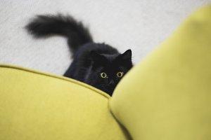 Cat Hiding Behind Chair