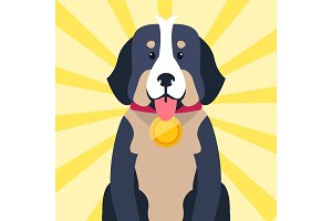 Bernese Mountain Dog with Award on Neck Isolated
