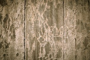 Texture surface wood oak background