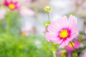 Pink flowers in the morning time