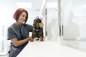 Doctor is making check up a dog.