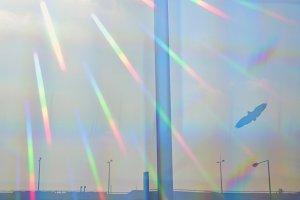 Prismatic Light Bird