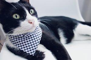 Cat in triangle scarf