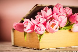 Tulips in book