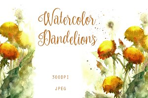 SALE Watercolor dandelion flowers
