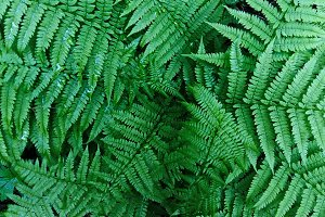 The leaf of the fern