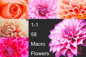 58 1-1 Macro flowers