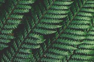 Large fern leaves closeup