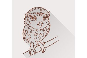 Drawing of little owl