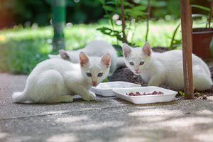 three white kittens in the garden