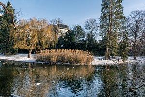 Wintertime Vienna / Lake
