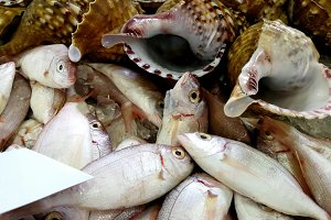 Fish market, fish and shells