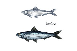 Sardine fish vector isolated sketch icon