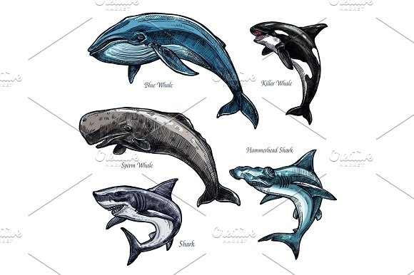 Giant Sea Animals Whale And Shark Vector Icons Set
