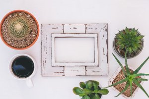 Rustic wooden frame with succulents