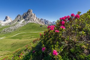 Flowers and the mountains