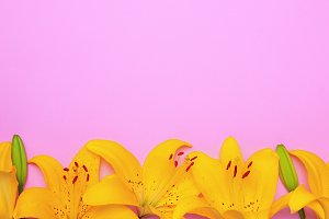 Yellow flowering buds of a lily