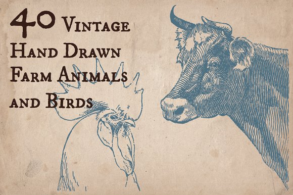 40 Vintage Farm Animals And Birds Illustrations Creative Market