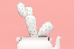 Cactus in a teapot. Minimal style