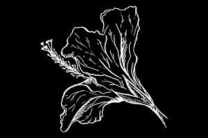 Hibiscus flower sketch vector art