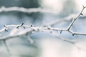 Abstract frozen thorny branch