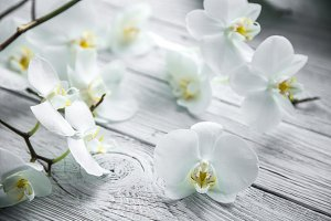 White Orchid on wooden background
