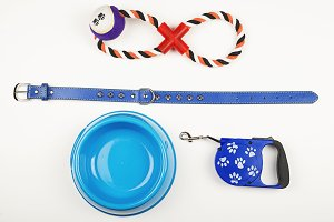 Leash, toy and bowl of dog food