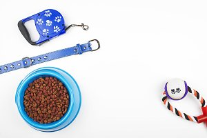 Leash, toy and bowl of dog food. Horizontal studio shot.