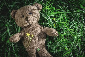 Teddy bear on the grass