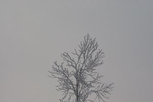Lonely tree II