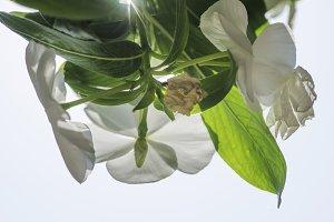 Flowers backlight