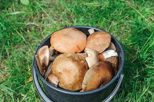 A bucket of fresh wild mushrooms, close up