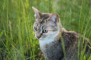 Kitten hiding in the green grass