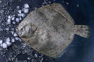 Raw fresh tuna fish