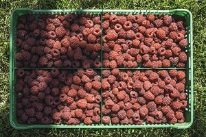 Raspberries in a green crate