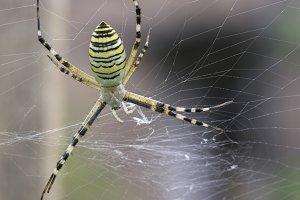 Spider in a garden