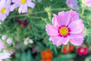 pink flowers blooming in the garden