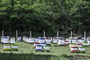 Beehives in bee farm