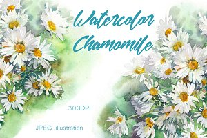 SALE! Watercolor chamomile flowers