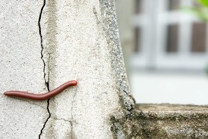 millipede on the wall