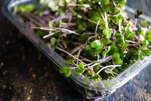 Organic food concept