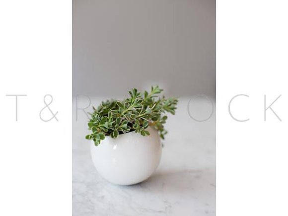 White Pot With Succulents On Marble
