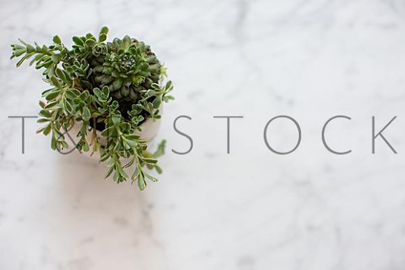Succulent Flat Lay Stock Photo