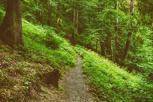 North scandinavian forest