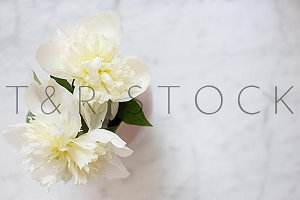 White Peonies Flat Lay on Marble