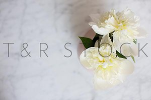 Peonies on Marble Desk Stock Photo